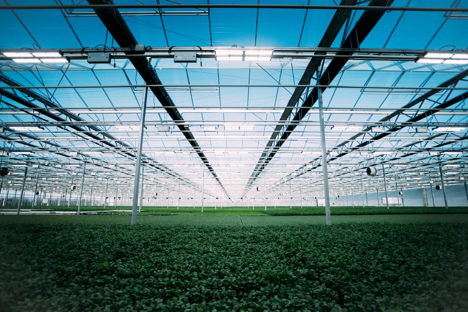 Heliospectra_Greenhouse Sea of Green_Web