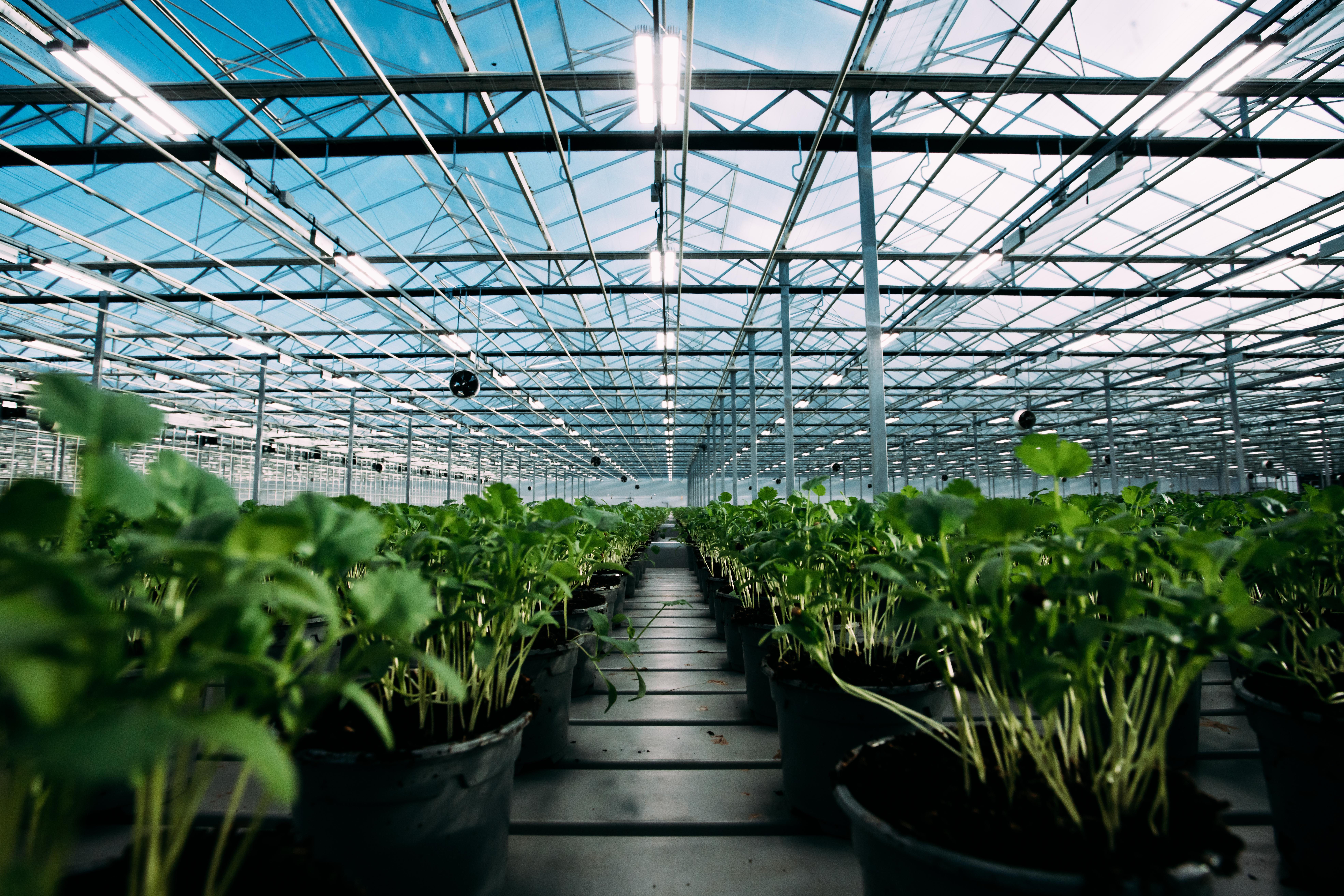 Bridge Farm Group Greenhouse
